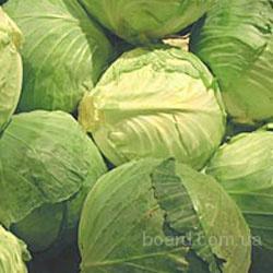 Продам Капусту б/к оптом с НДС от сельхозпроизводителя, вилок плотный...