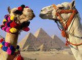 Горячие туры, Египет, ОАЭ