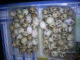 Продам свежие яйца перепелов из домашней фермы!