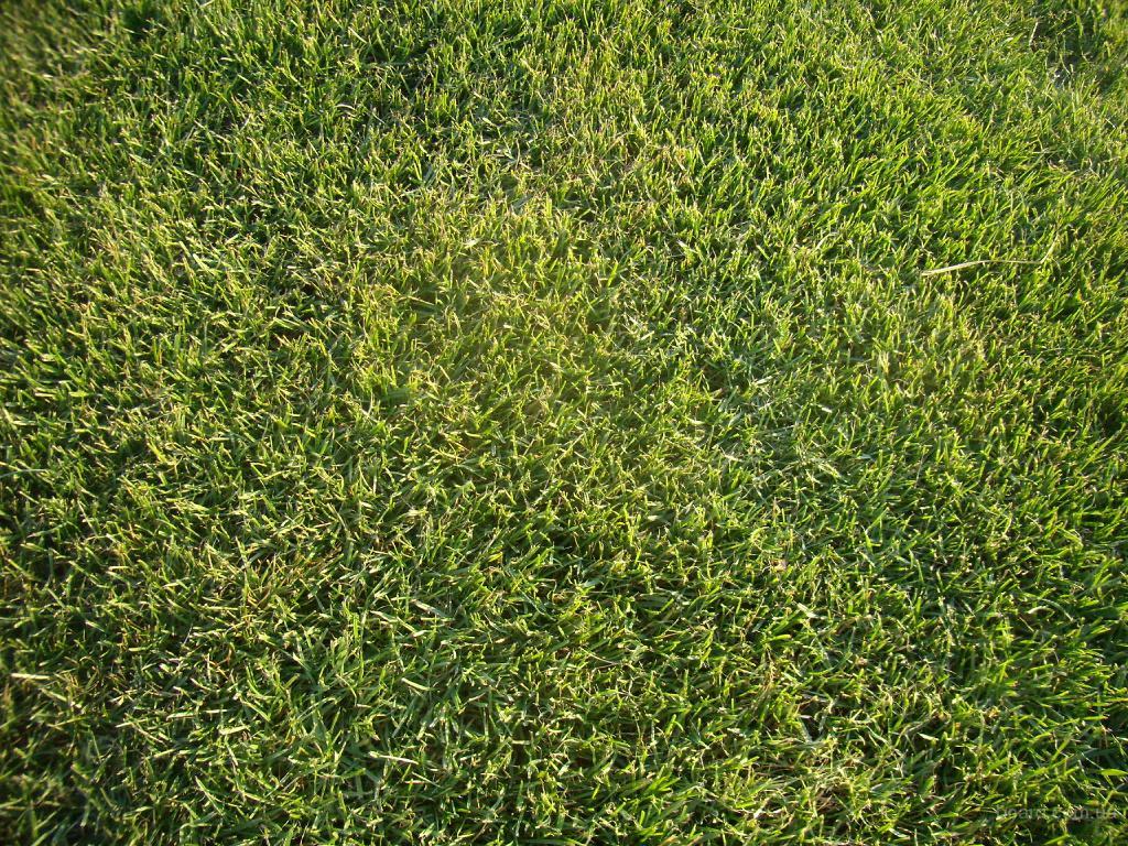 Газонні трави
