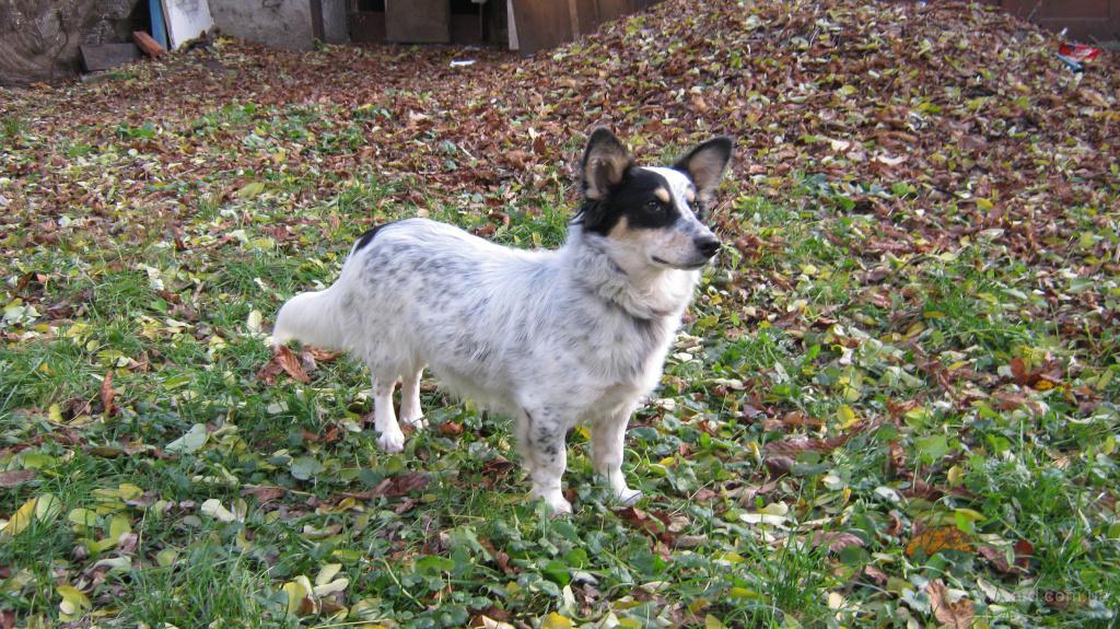 Купить щенка, взять в дар бесплатно. Объявления о 92