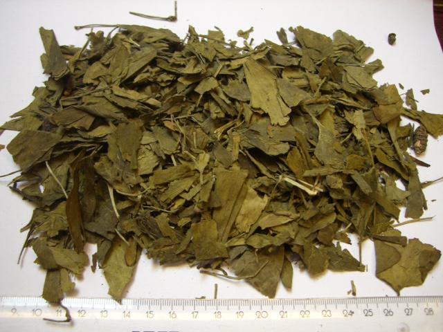гинкго лист