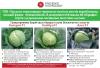 Пакетоване насіння чеської фірми «MoravoSeed»
