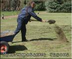 Мульчирование газона (землевание газона)