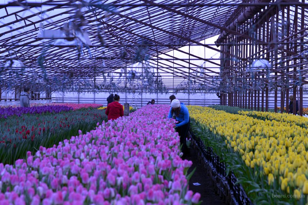 Куплю цветы оптом владивосток