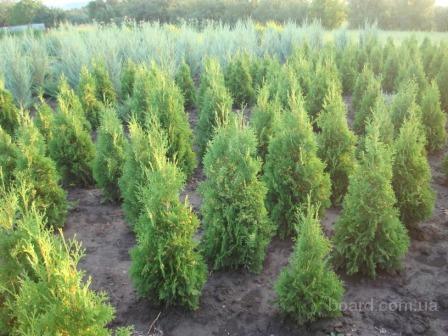 Купить растения для ландшафтного дизайна в харькове