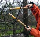 Обрезка плодовых деревьев, обрезка декоративных растений