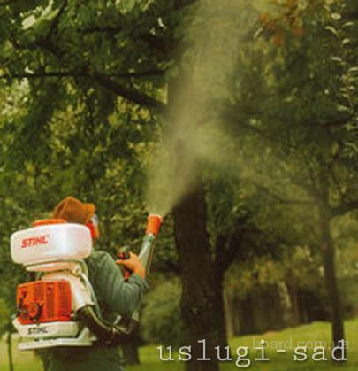 Химическое опрыскивание деревьев