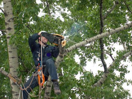Обрезка яблонь обрезка деревьев