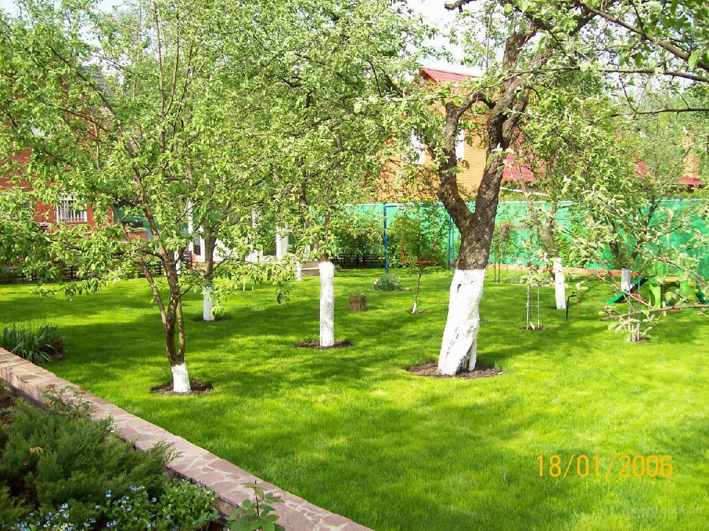 Декоративные растения, ландшафтный дизайн, хвойные,деревья