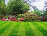 Продам суміш насіння газонних трав