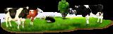 Скупка крупного рогатого скота в Казани: