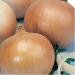 Продаем семена лука репчатого сорт «Халцедон»