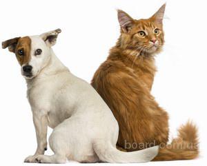 Зоотовары для кошек и собак в интернет-магазине «Zoo2day»