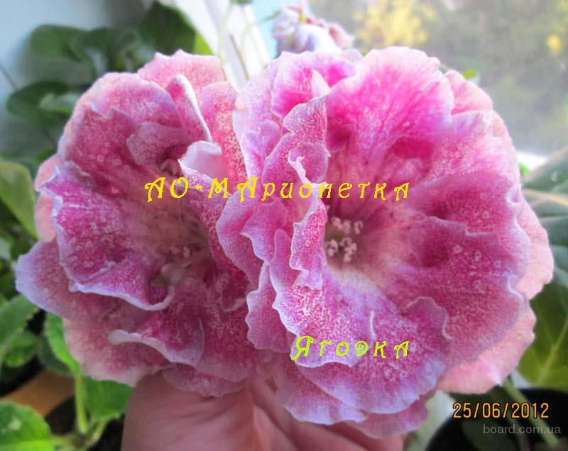 Комнатные цветы с клубнями