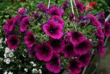 Посадка цветов, уход за клумбами, продажа цветов, услуги ландшафтного дизайнера, г.Киев.