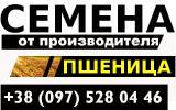 Семена озимой пшеницы. Сорт: Антоновка, Писанка, Богдана, Наталка, Золотоколоса. От производителя