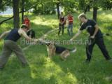 Подготовка караульных собак.