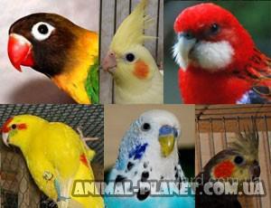 Продаются ручные попугаи мелких и средних пород