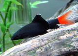 Аквариумные Рыбки красивые, ухоженные, разные