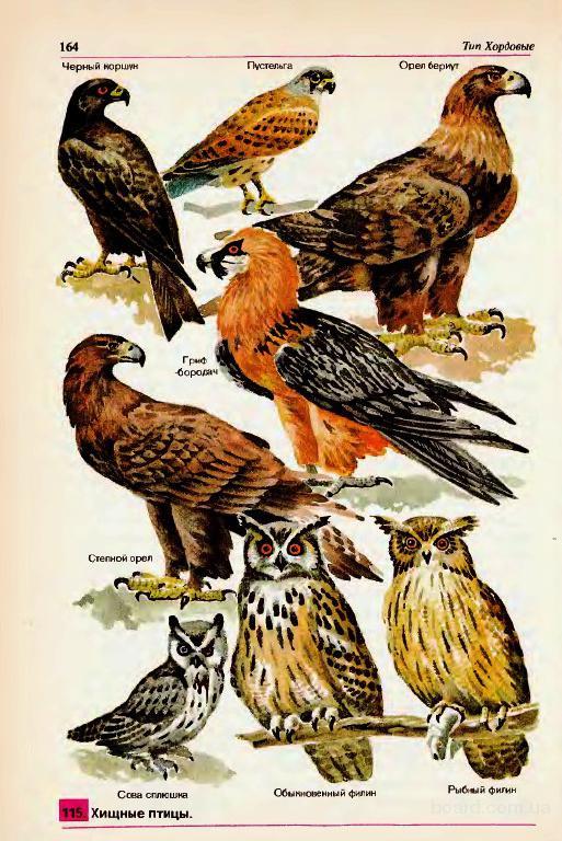 Хищные птицы для содержания в частных домах и коттеджах.