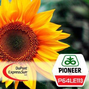 "Семена подсолнечника  П64ЛЕ113  (Экспресс Сан) ""Pioneer"""