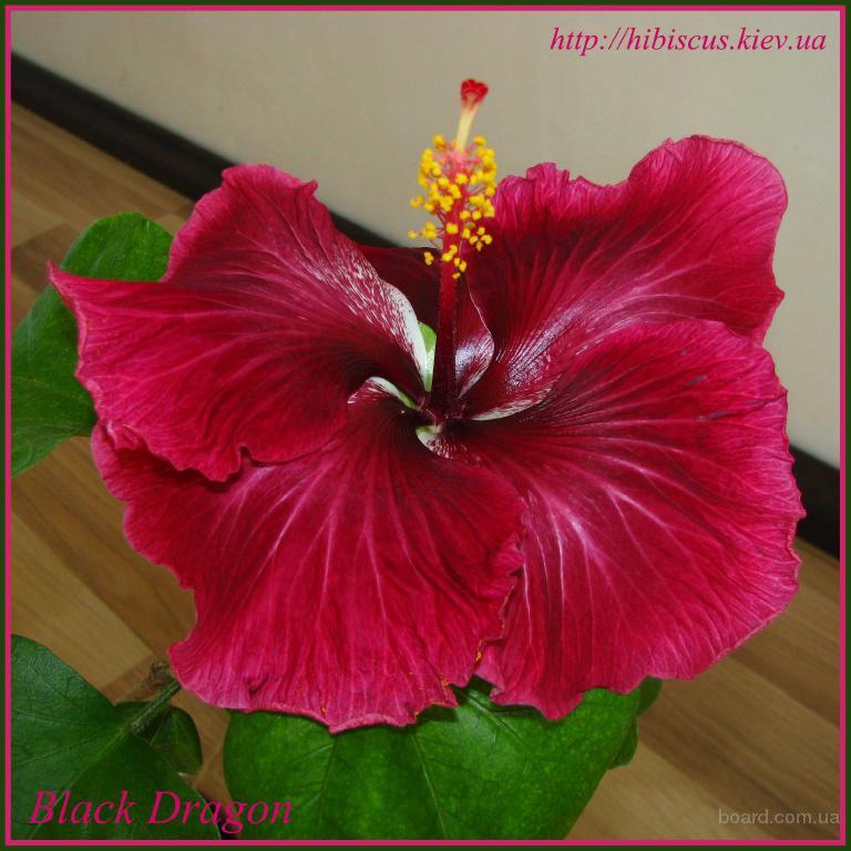Похожие на фиалку цветы 65