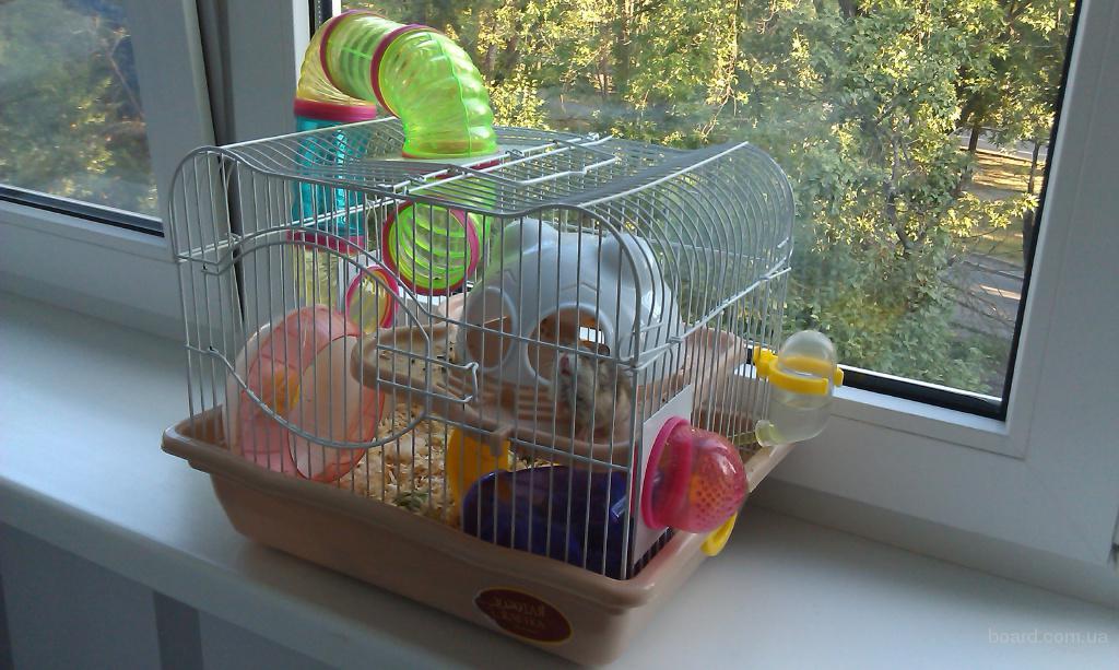 Клетка для джунгарского хомяка своими руками в домашних условиях 78