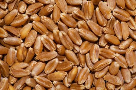 Закупаем ячмень, пшеницу, рапс, горох, кукурузу