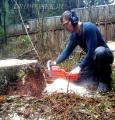 спилить дерево,валка деревьев,срезать ветку