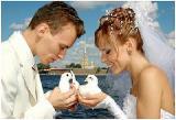 Голубиный фейерверк из белых голубей