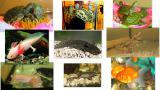 Красноухие черепахи, аксолотли, тритоны, лягушки!