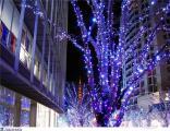 Световое оформление дерева,новогоднее украшение,праздничная иллюминация,монтаж гирлянд