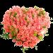 Заказ цветов на праздники Харьков