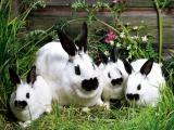 Куплю кроликов живим весом
