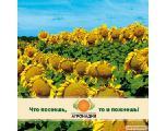 Семена подсолнечника и Средства защиты растений