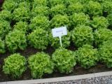 Профессиональные семена овощей, цветов