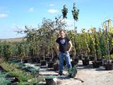 Лиственные растения крупномеры. ( h 2. 00м – h 9. 00м )