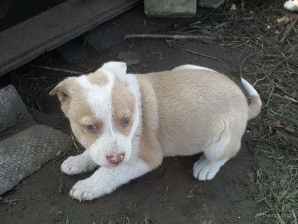 Купить щенка, взять в дар бесплатно. Объявления о 55
