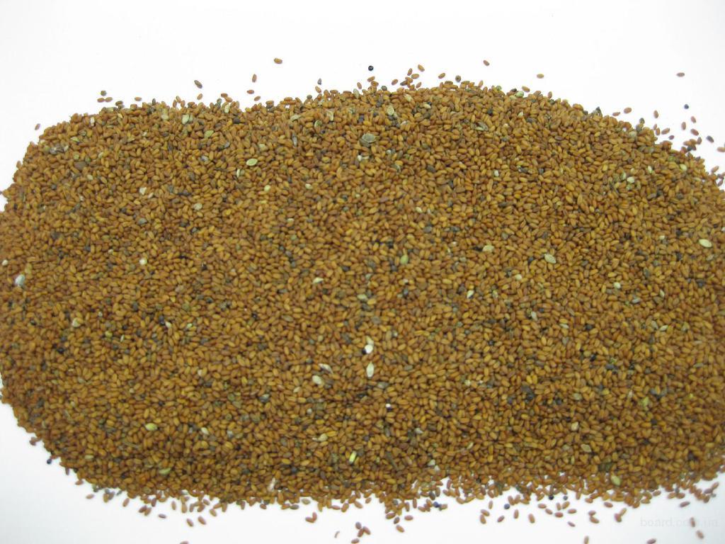 рыжик семена