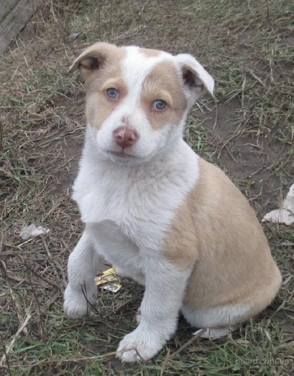 Купить щенка, взять в дар бесплатно. Объявления о 1