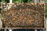 Продам 4 рамочки пчелопакеты, Карпатской породы
