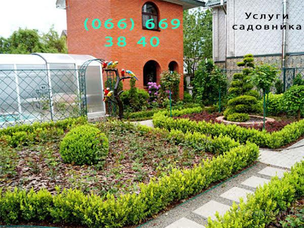 Растения адаптированные к Украине, минимальному уходу, выращенные на органике
