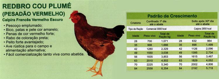 Цыплята Редбро (Redbro),суточные и подрощенные.