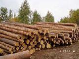 Руд Стойка руддолготье пропсы , Техническая древесина