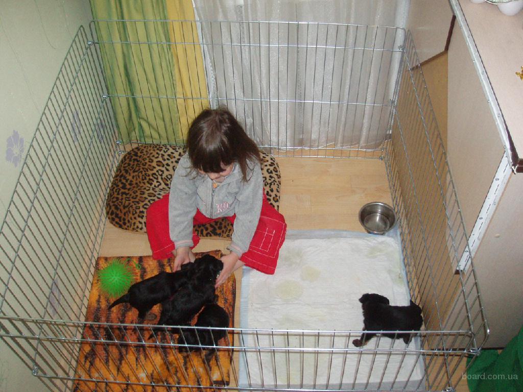Домашнее ограждение для содержания щенков или котят 100х100хh60 см