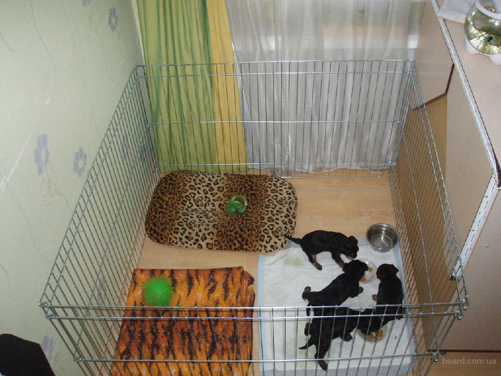 Домашний манеж-клетка для содержания щенков всех пород 100х100хh60 см