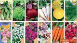 Оптом семена овощных культур: лука, щавеля, петрушки, укропа, моркови и капусты.