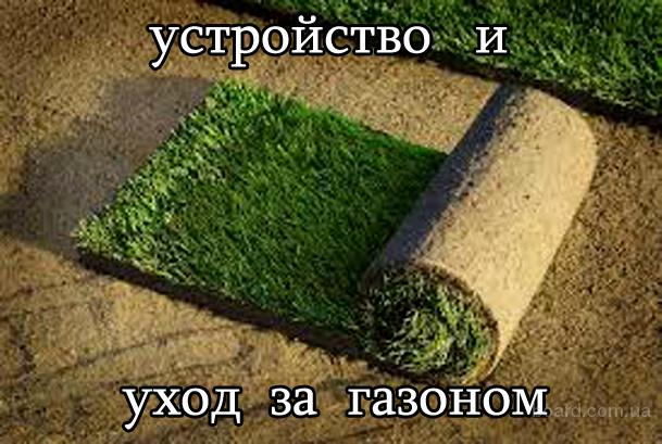 Устройство газона. Уход за газоном