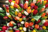 Тюльпаны от производителя к 8 марта